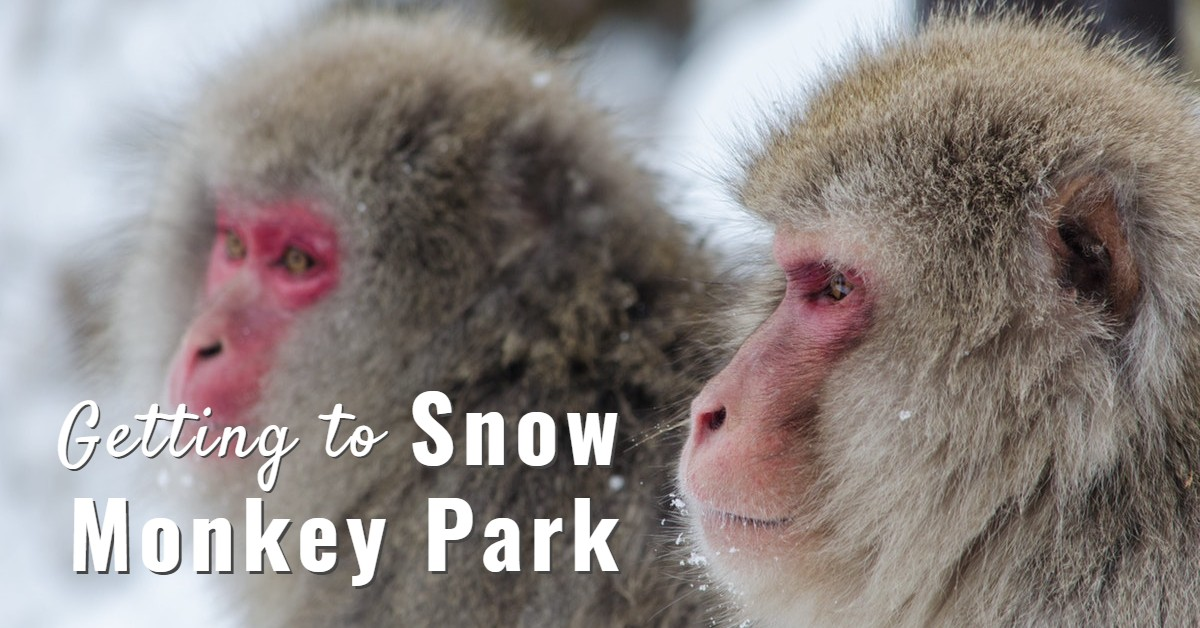 The Ultimate Bucket List Trip – A Visit to Nagano's Snow Monkeys