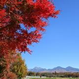 秋晴れの八ヶ岳山麓