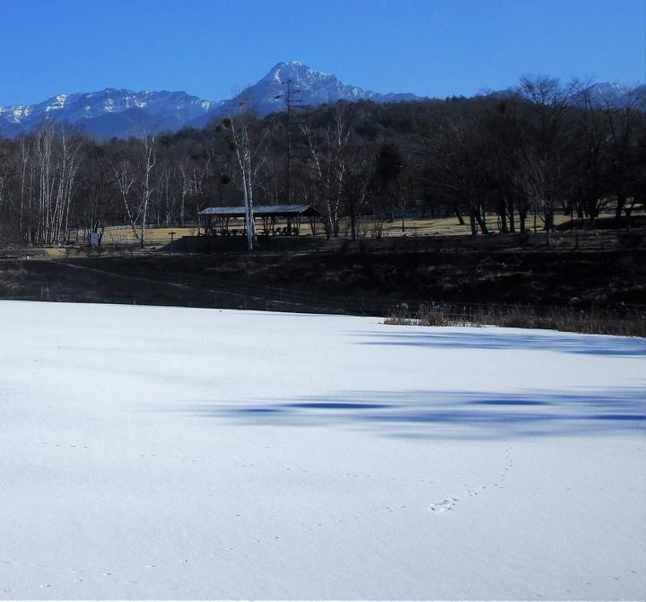 キツネ1月13日まるやち湖の.JPG