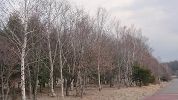 深山地区環境保全林②.JPG