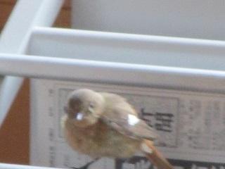 http://www.alpico.co.jp/shikinomori/news/images/IMG_4982.JPG