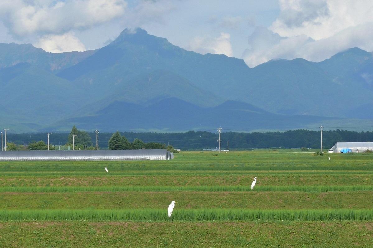 http://www.alpico.co.jp/shikinomori/news/images/P1120937.JPG