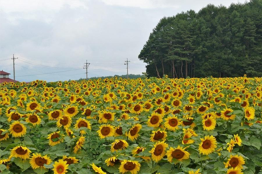 http://www.alpico.co.jp/shikinomori/news/images/P1130140.JPG