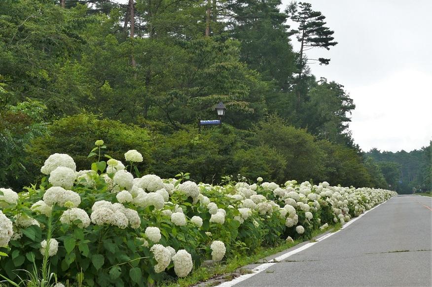http://www.alpico.co.jp/shikinomori/news/images/P1130184.JPG