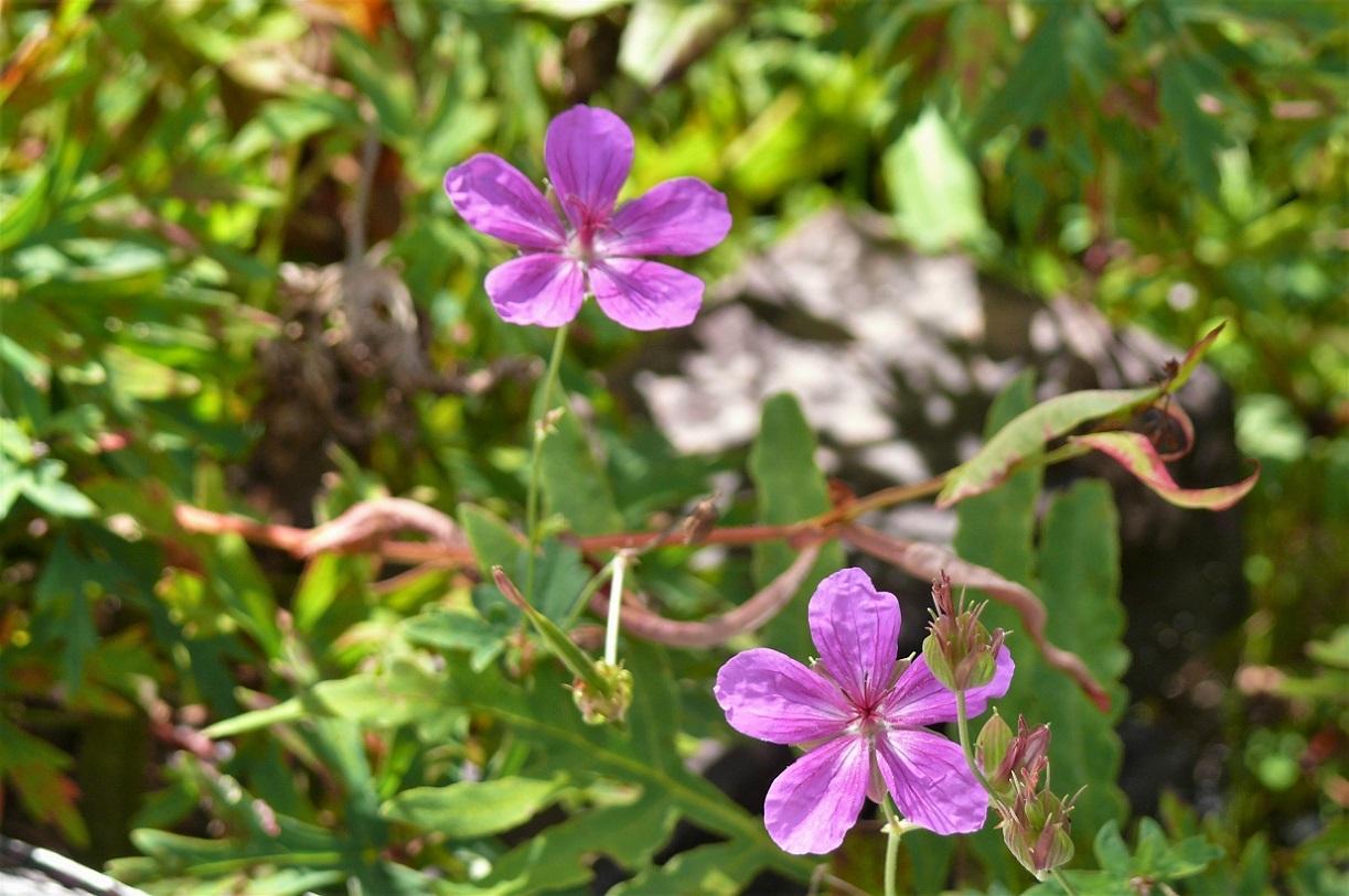 http://www.alpico.co.jp/shikinomori/news/images/P1140368.JPG